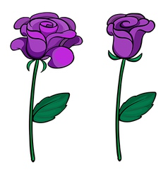 Two purple roses vector