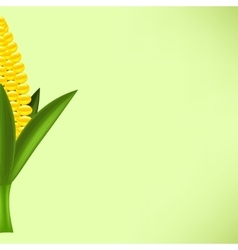 Yellow cob corn vector