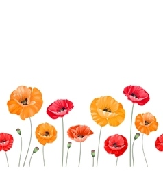 Pattern of poppy flowers vector