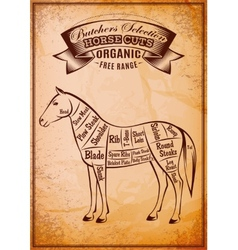 Diagram cut carcasses horse vector