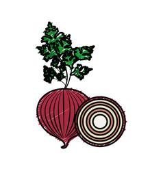 Fresh onion and slice plant organ food vector