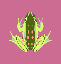 in flat style toad vector image vector image