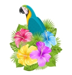 Parrot ara colorful hibiscus flowers blossom and vector