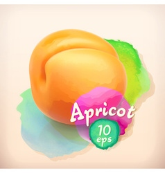 Apricot summer fruit vector