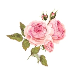 Branch of roses vector