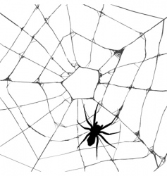 Grunge web spider vector