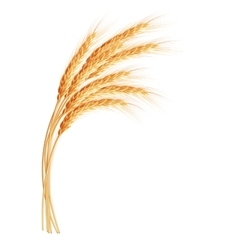 Wheat ears with space for text eps 10 vector