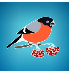 Colorful bullfinch on a blue background vector