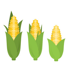 corn in flat style vector image vector image