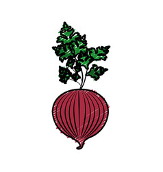 Fresh onion with plant organ food vector