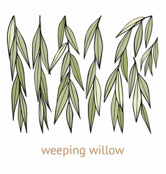 Weeping willow hand drawing set of vector