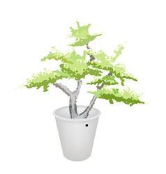 Bonsai tree in flower pot vector