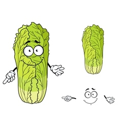 Healthy leafy cartoon chinese cabbage vegetable vector