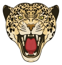 Leopard Portrait Angry wild big cat vector image vector image