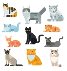 Cat breeds poster cute pet animal set vector