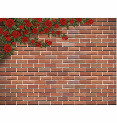 climbing rose on a brick vector image