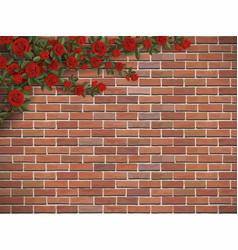 climbing rose on a brick vector image vector image