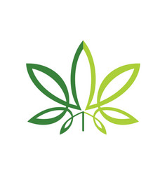 Green leaf cannabis logo vector