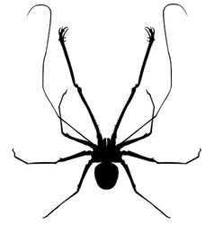 A whip spider vector