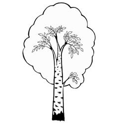 birch vector image vector image