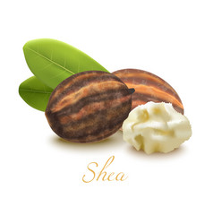 Shea butter nuts and leaves in realistic style vector