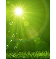 Summer green background vector image