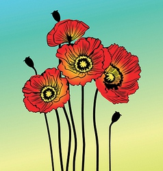 Poppy spring flowers vector