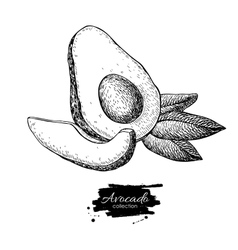 Hand drawn avocado sliced piece and leaves vector
