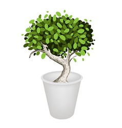 Bonsai tree in a ceramic pot vector