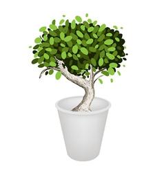Bonsai tree in a ceramic pot vector