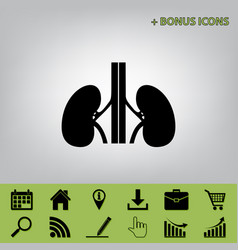 Human anatomy kidneys sign black icon at vector