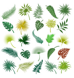 Palm exotic leaves set vector