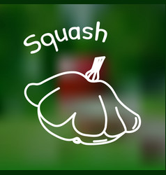 thin line squash icon vector image