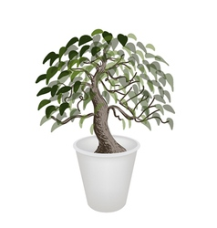 Bonsai tree in a flower pot vector