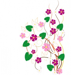 flower branches vector image