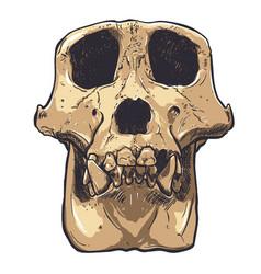 A monkey skull on background vector