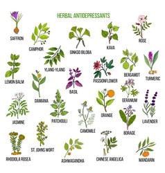 Best herbal antidepressants vector