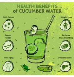 Cucumber Benefits Image vector image vector image