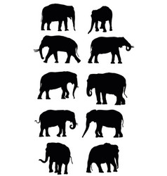 Set of black elephants vector