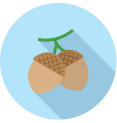 Oak seeds vector