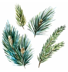 Raster watercolor fir-tree branches vector