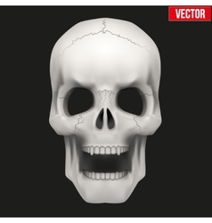 Human skull with open mouth vector