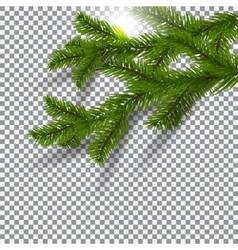 Two green realistic shadows with spruce branches vector