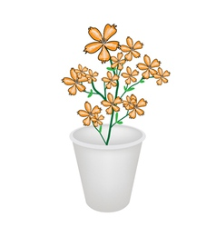 Lovely orange cosmos flowers in a flowerpot vector