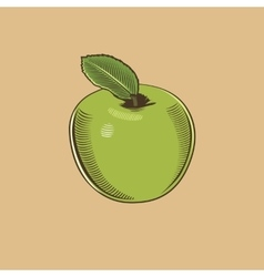 Apple in vintage style colored vector