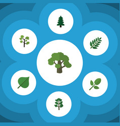 Flat icon nature set of acacia leaf tree foliage vector