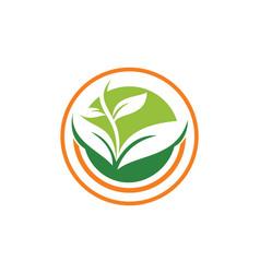 Seed plant organic logo vector