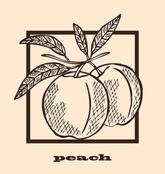 Hand drawn peaches vector