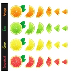 Big set of citrus slices vector image