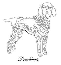 Drachhaar dog outline vector